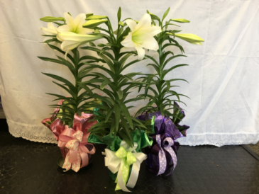 Classic Single Stem Easter Lily BEST SELLERS