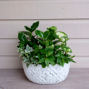Classic Lush Planter in Surrey, BC | Hunters Garden Centre And Flower Shop