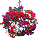 CLASSIC PETUNIA MIX  HANGING BASKET