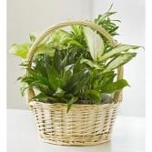 Classic Plant Basket Garden Plants
