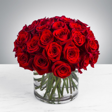 Classic Red Roses.  By the Dz