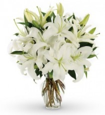 Classic White Lilies Cut Flowers