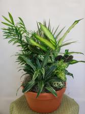 Clay Pot Dish Garden  Planter