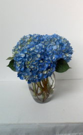Blue Skies hydrangeas in a vase