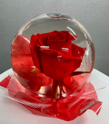 Clear Red Rose