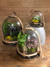 Cloche Terrarium Plant