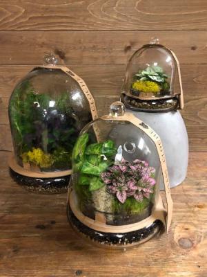 Cloche Terrarium Plant in Vernon, NJ | HIGHLAND FLOWERS