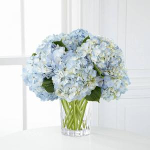 CLOUD  HYDRANGEA Occasions in Coconut Grove, FL | Luxury Flowers