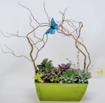 Collection of Succulents Container Garden