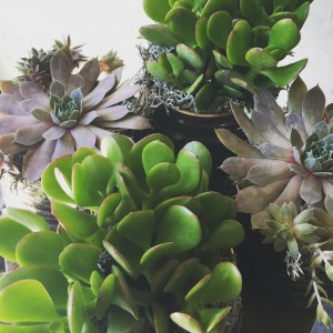 Collection of  Succulents in Toronto, ON | BOTANY FLORAL STUDIO