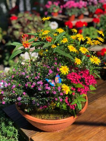 Color Bowl Planter Planter