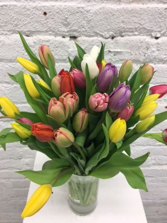 Color Mix Tulips