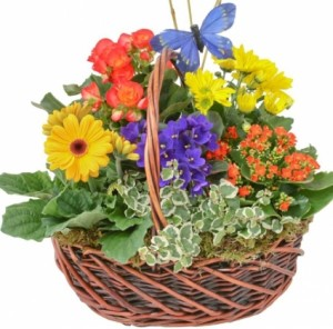 SPRING GARDEN BASKET  in Germantown, MD | GENE'S FLORIST & GIFT BASKETS
