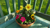Colorbowl Flowering Planter