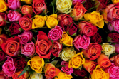 Dozen Colored Rose Arrangement
