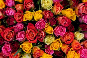 Dozen Colored Rose Arrangement  in Benton, AR | FLOWERS & HOME OF BRYANT/BENTON