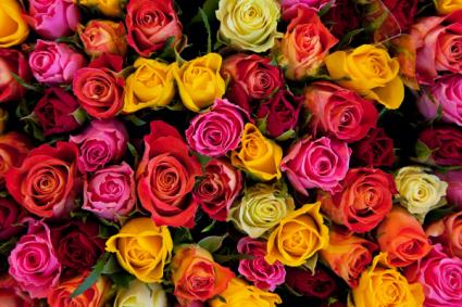 Dozen Roses Arrangement Colored Roses
