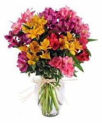 Colorful Alstromeria Arranged in Vase fresh flowers