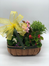 Colorful Bloom Basket Dish Garden