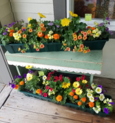 Large colorful blooming annual planter Outdoor plants