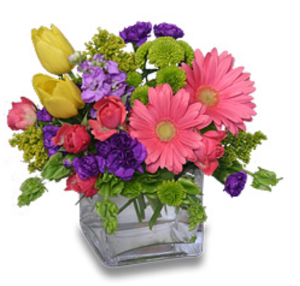Colorful Cube Flower Arrangement in Selma, NC | SELMA FLOWER SHOP