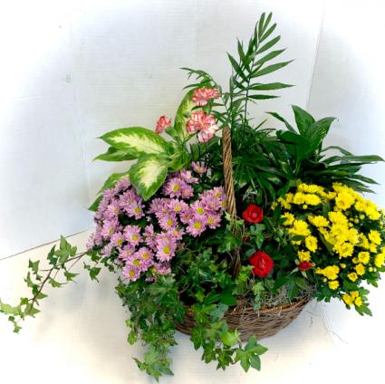 Colorful Flowering Dish Garden