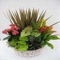 Colorful Foliage Basket Foliage Basket