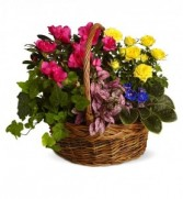 Colorful Garden Basket Plant Basket