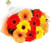 COLORFUL GERBERAS GIFT WRAP