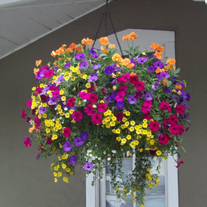 COLORFUL HANGING BASKET  in Zanesville, OH | FLORAFINO FLOWER MARKET & GREENHOUSES