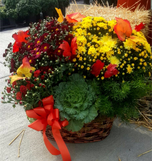 Colorful Mum Basket  in Mansfield, OH | JANET'S FLORAL DESIGN