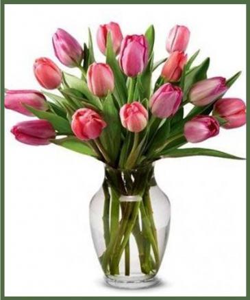 Colorful Tulips Springtime Favorite!