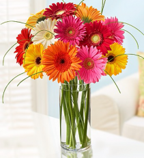 COLORFUL WORLD OF GERBERA DAISIES