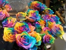 Colors of Love  Dz Roses in a vase