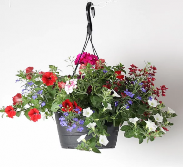 Colourful Mix Outdoor Hanging Basket
