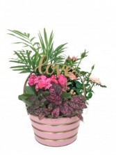 Colourful Valentine Dish Garden Fresh Tropical and Blooming Plants in Container
