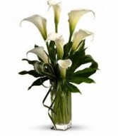 Column of Callas Cut Flowers