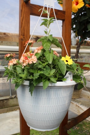 "Combination Hanging Basket Hanging Basket - 10"""