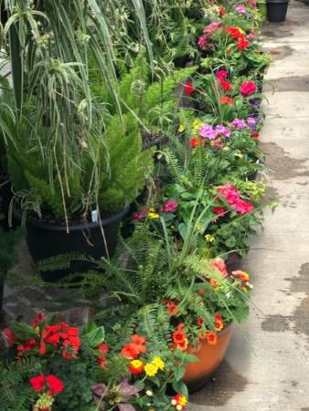 Combination Pots Outdoor Plants
