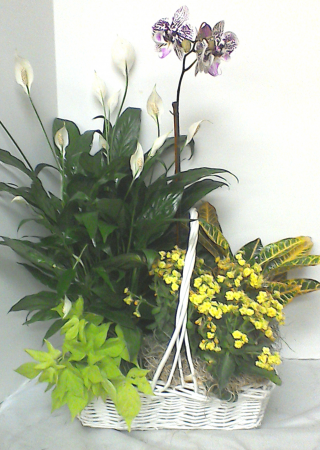 Combination Whicker Plants Basket