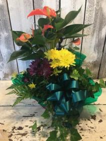 combo any plant/flowers seasonal plants/flowers