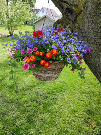 Combo Birch Hanging Basket