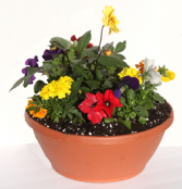 Combo Bowl Variety of annual plants