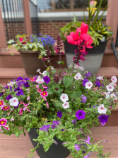 Combo Flowering Pots Spring