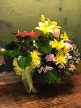 combo garden seasonal plants/ and flowers
