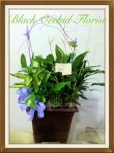 Combo Green Dishgarden plants