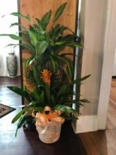 Combo Plant Basket Plant