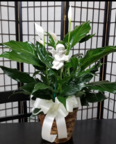 comfort peace lily plant