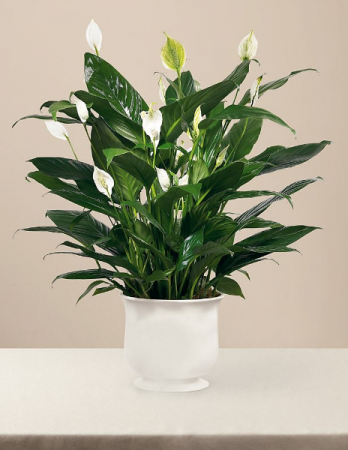 Comfort Planter by FTD