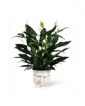 Comfort Planter Plant